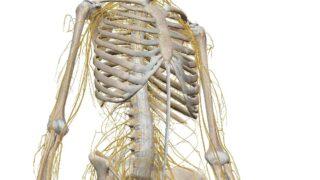 脳・神経系画像