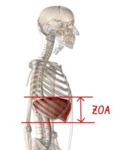 ZOAの説明イラスト