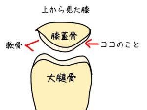 膝蓋骨の軟骨のイラスト