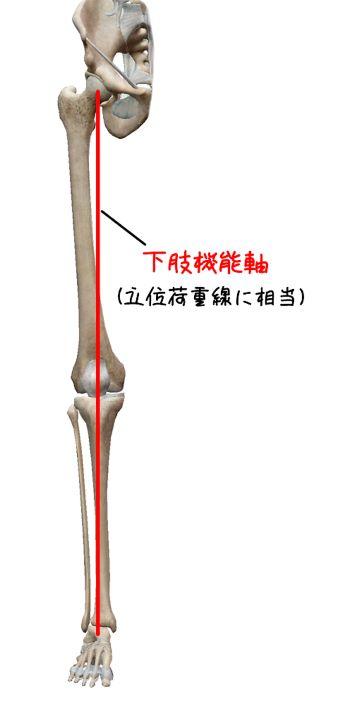 下肢機能軸のイラスト