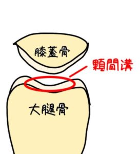 顆間溝のイラスト
