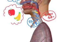 喉頭咽頭部