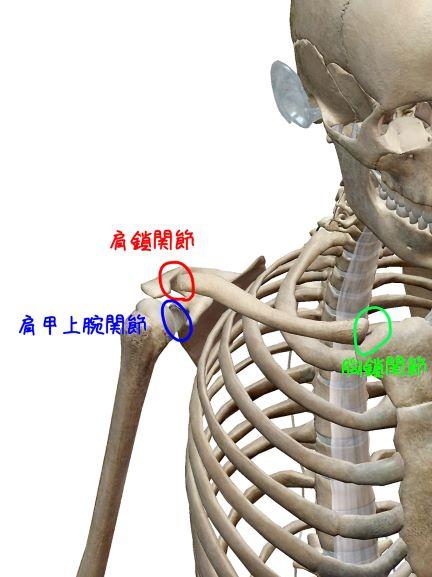 肩関節の解剖学的関節