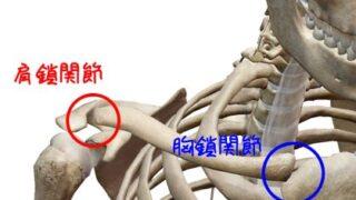肩鎖関節 胸鎖関節