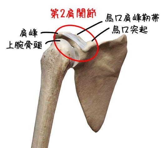 第2肩関節
