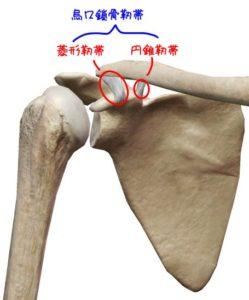 烏口鎖骨靱帯