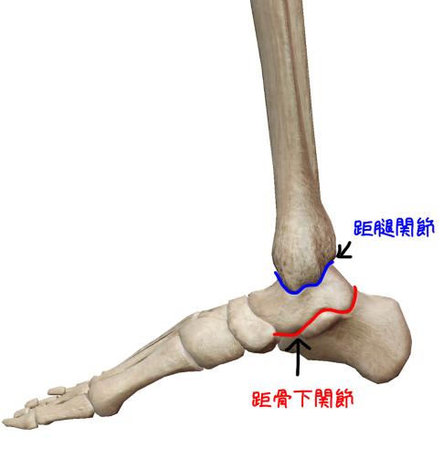 距腿関節と距骨下関節のイラスト
