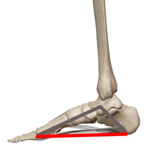 足部のトラス構造のイラスト
