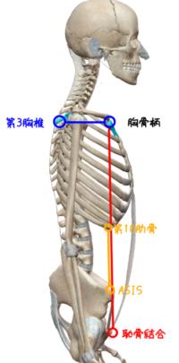 骨盤と胸郭のアライメント評価の図