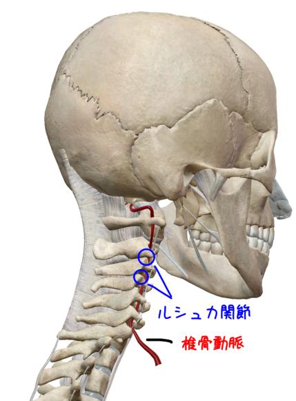 ルシュカ関節と椎骨動脈のイラスト