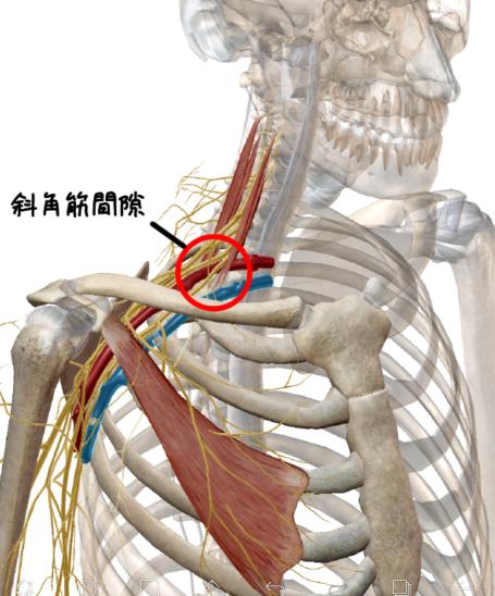 斜角筋間隙の解剖イラスト