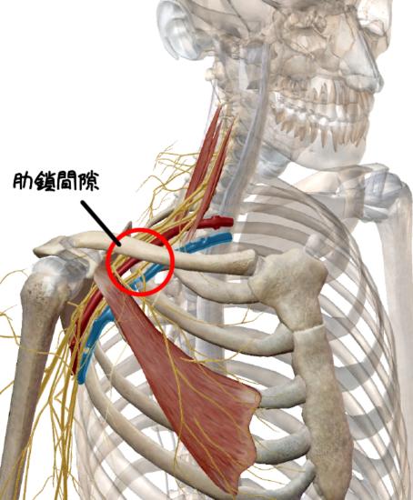 肋鎖間隙の解剖イラスト