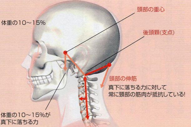 頚椎に作用する力のイラスト