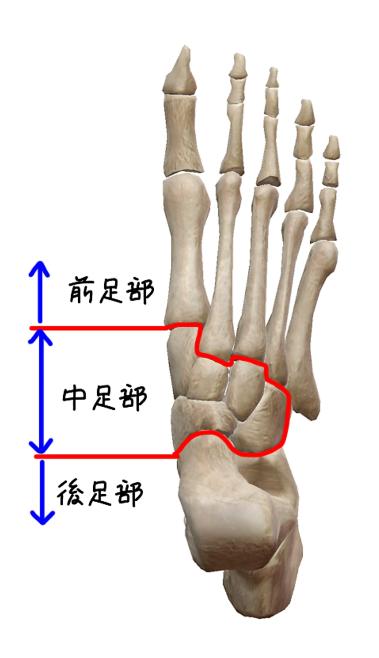 足部の分類のイラスト