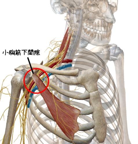 小胸筋下間隙の解剖イラスト