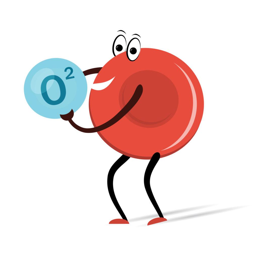 酸素を運ぶ赤血球