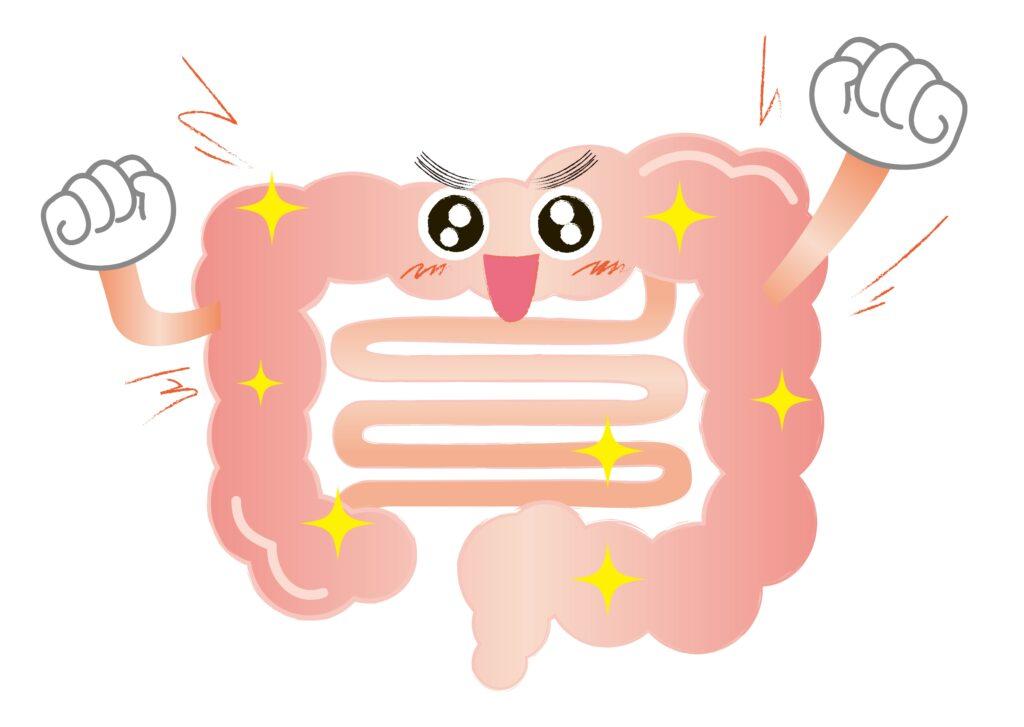 腸のイラスト