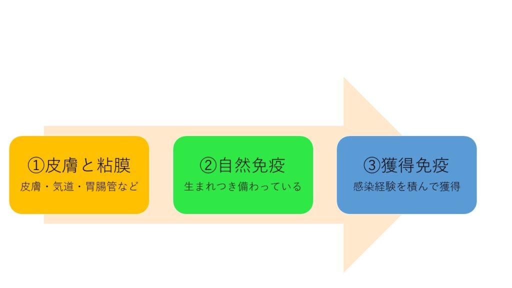 免疫の3段階のイラスト