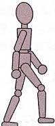 遊脚中期のイラスト