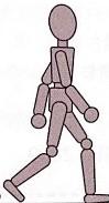 前遊脚期のイラスト